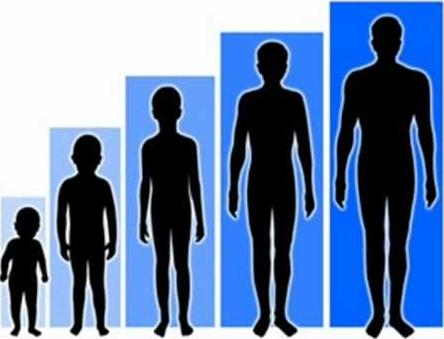 Faktor Yang Dapat Mempengaruhi Tinggi Badan